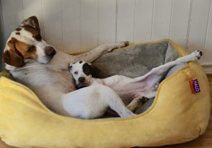The Pointer Sisters: Lexi & Sky