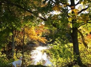 Enjoying the view, Fall, 2016