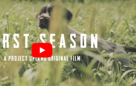 First Season – A Candid Film About the Journey of Our First Bird Dogs