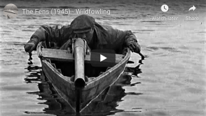 Duck hunting with an old-school punt gun, The Fens (1945) - Wildfowling