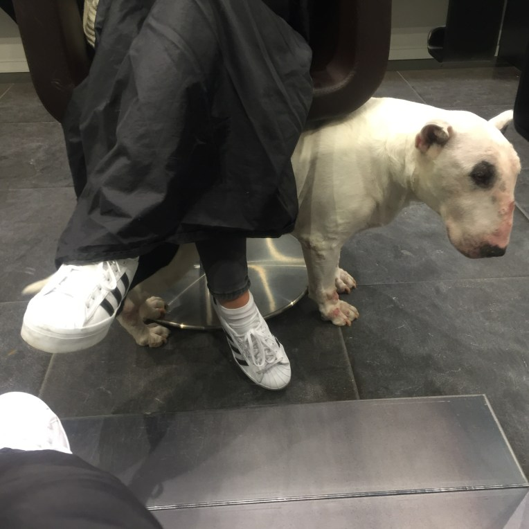 Aveda hair treatment on Dogs and Dresses