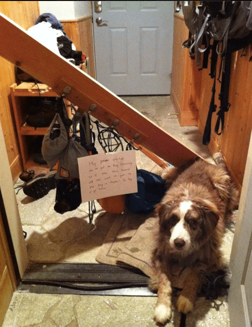 My People Wanted To Get On Dog Shaming So I Tore