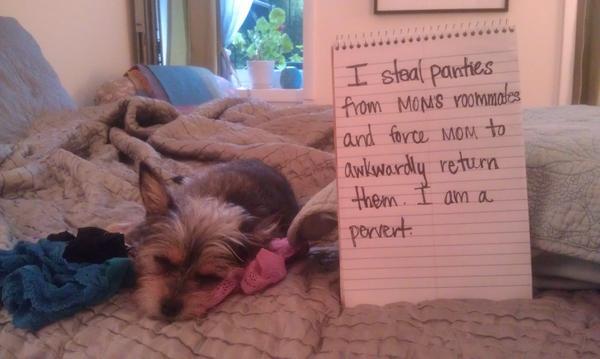 I Have Found Several Underwear Nests In Her Dog