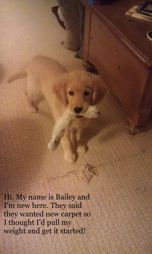 Bailey-Carpet