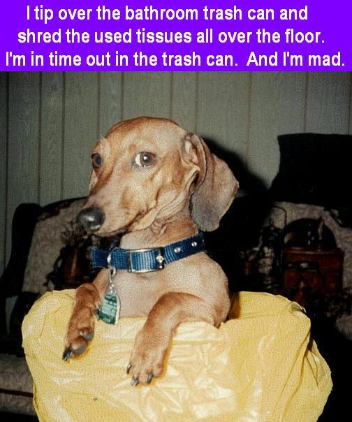 Dog Shaming Video Trash Can