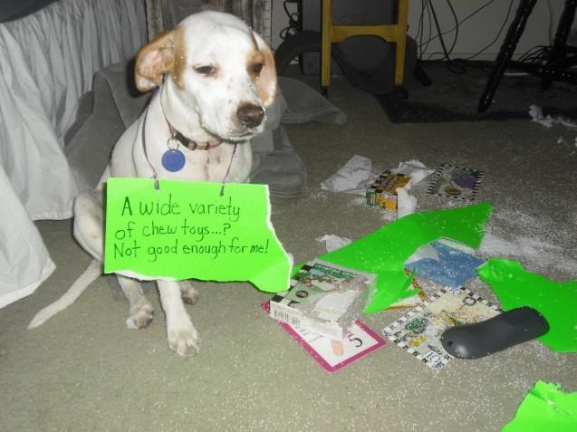 very-bad-dog-017