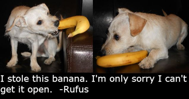 Rufus-Banana-Thief