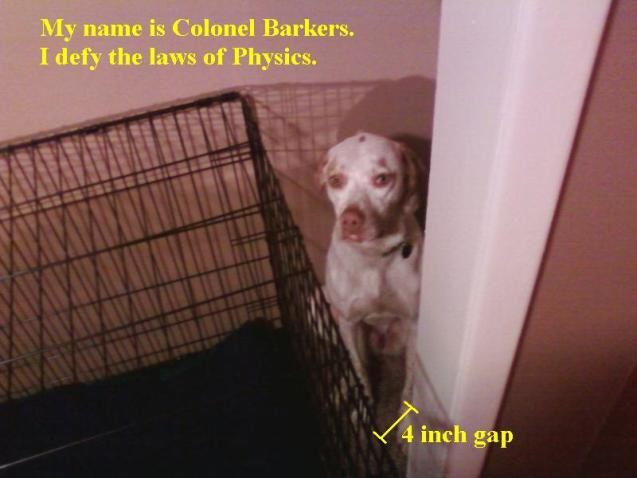 barkers-in-closet