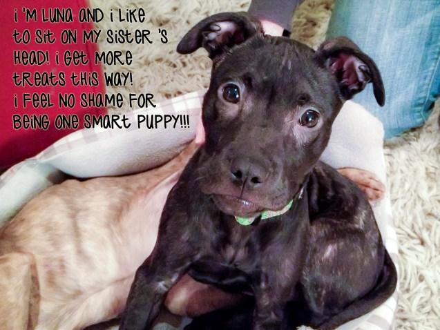 luna-dog-shaming-smart-puppy-4