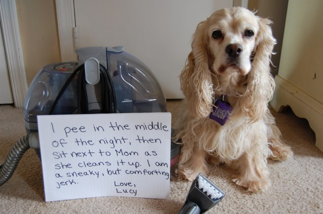 lucy-pee-pic