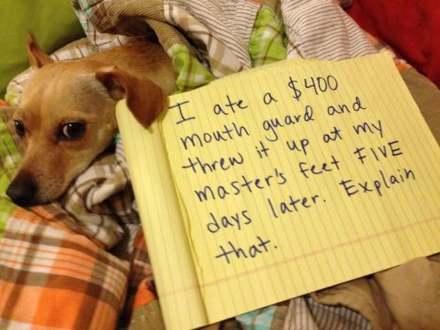 dog-shaming-mimi