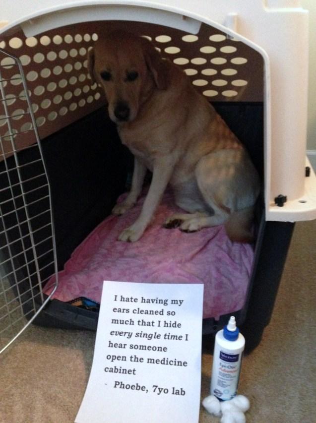Dog-Shaming