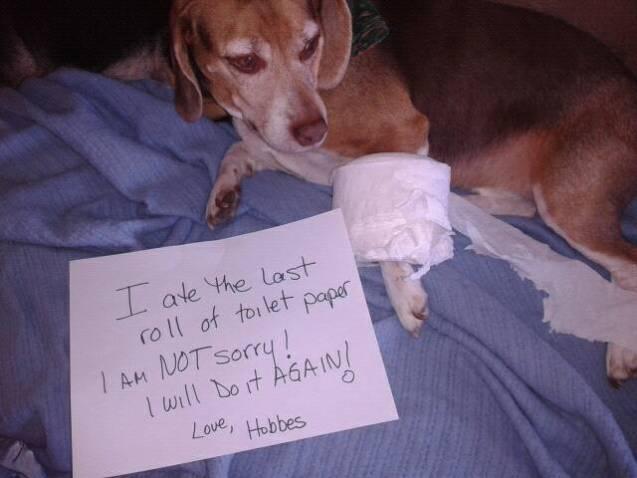 Hobbes-shaming-12-21-13