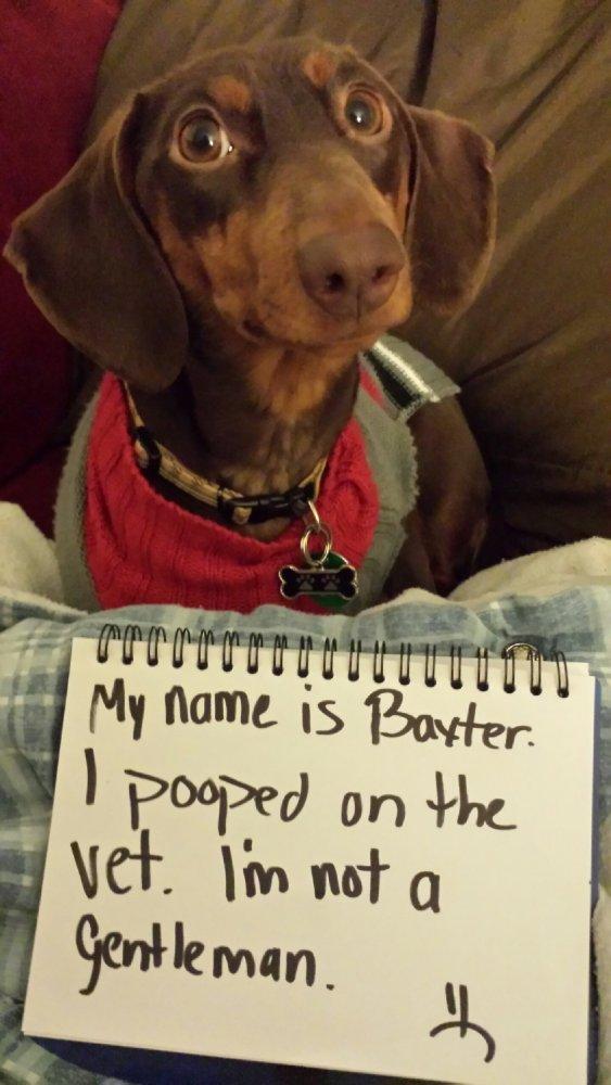 Baxter-VS-vet-Jan-2014