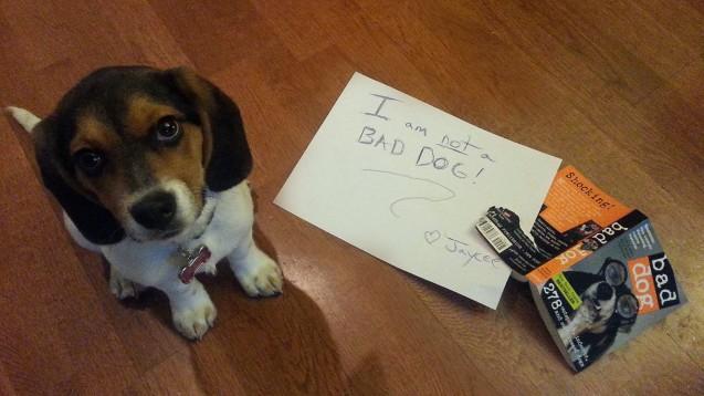 bad-beagle