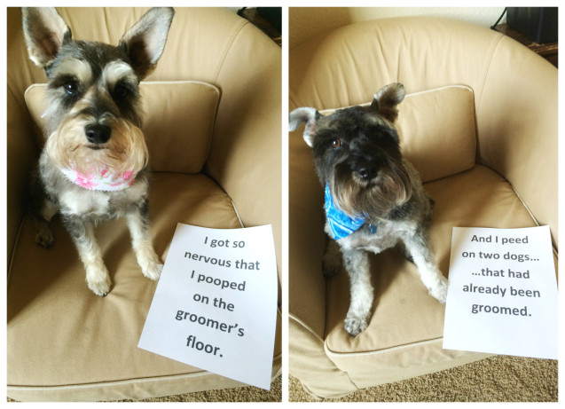 schuler-dogshaming