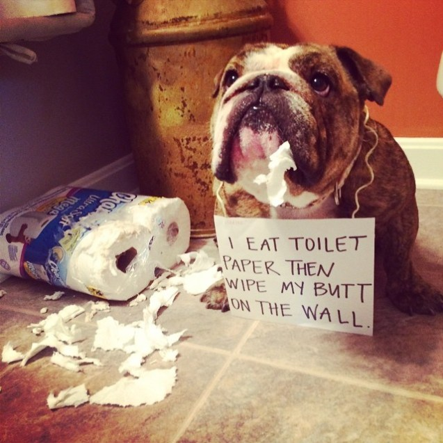Toilet Training A Dog That Is Left Alone