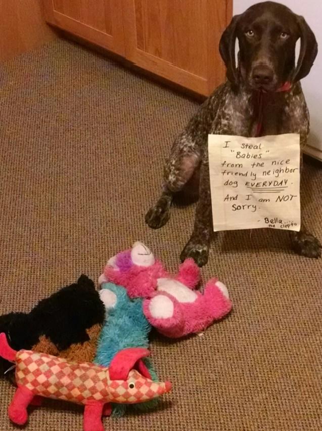 Bella-the-baby-thief