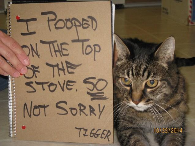 Tigger-Shame