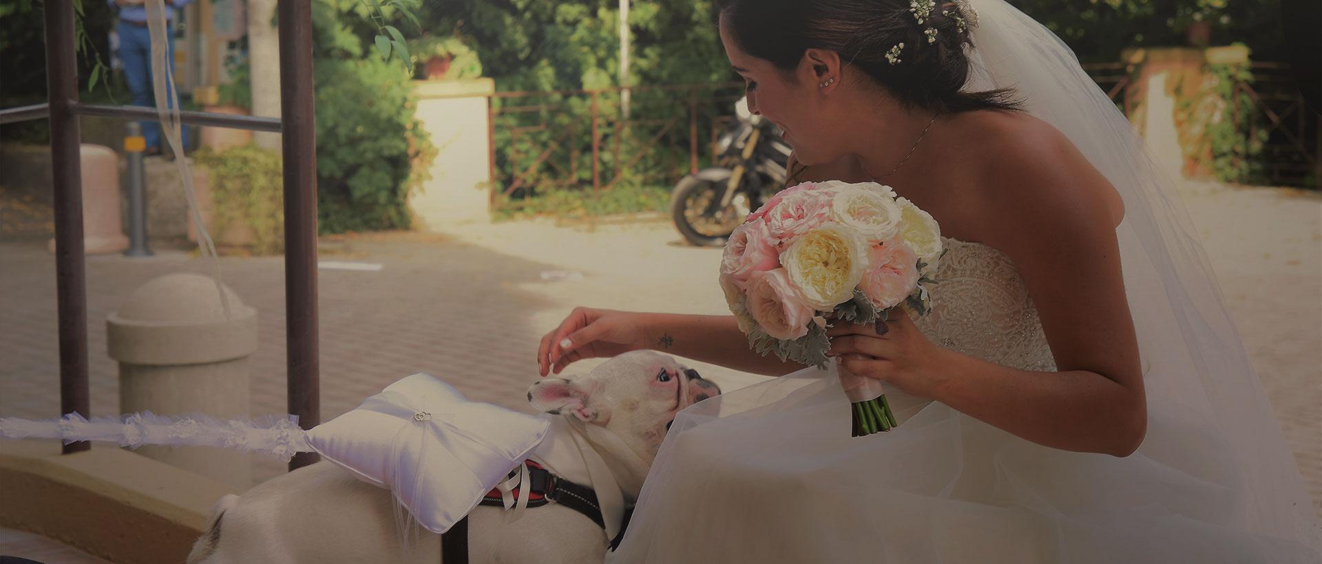 dog sitting matrimoni