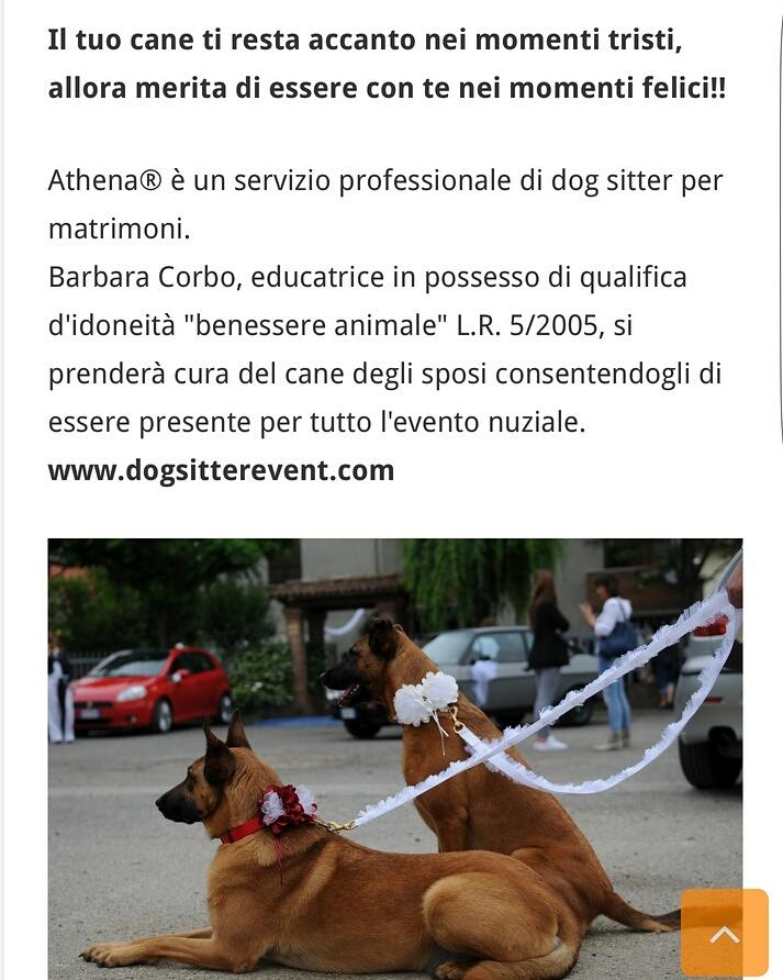 Vivaboy presenta Athena® dog sitter per matrimoni