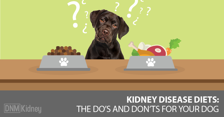 Kidney Failure What To Feed Your Dog