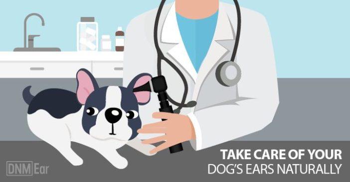 dog-ear-health