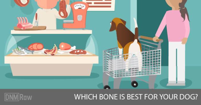 Which Bone Is Best