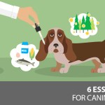 6 Essential Oils For Your Dog S Allergies Dogs Naturally