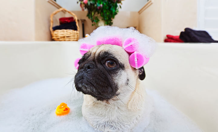 safe shampoos for dogs
