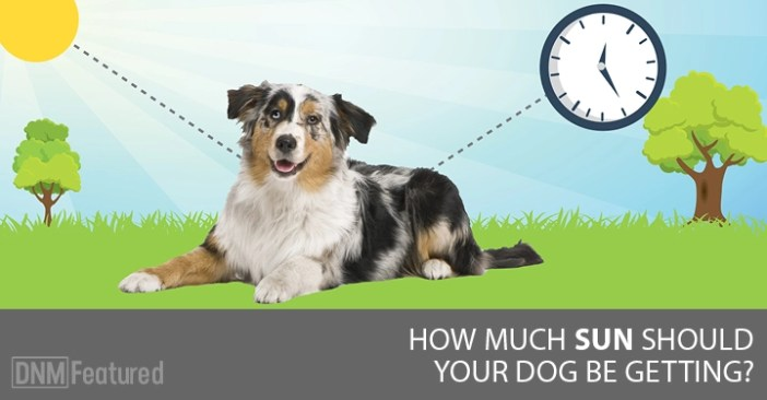 how much sun should your dog be getting-DNM