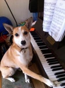 bambi at piano