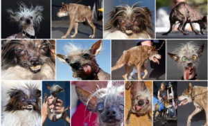 ugly dogs