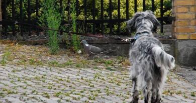 Cani da caccia in città, un progetto da condividere.