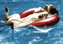 Animali e vacanze: quasi la metà dei padroni rinuncia a partire