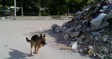 Kaos il cane da ricerca, impiegato ad Amatrice è morto avvelenato.