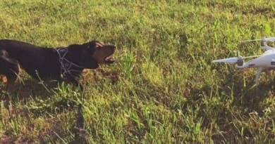 Capire un cane da caccia  in città. Che fatica…