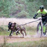 BIKEJORING: come impostare gli allenamenti!
