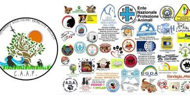 Nasce il CAAP. Le associazioni animaliste si alleano per la Puglia.