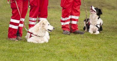 Il cane da ricerca non è un eroe, ma un cane motivato e ben addestrato.