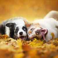 Il primo capodanno della vita del tuo cane è importante.