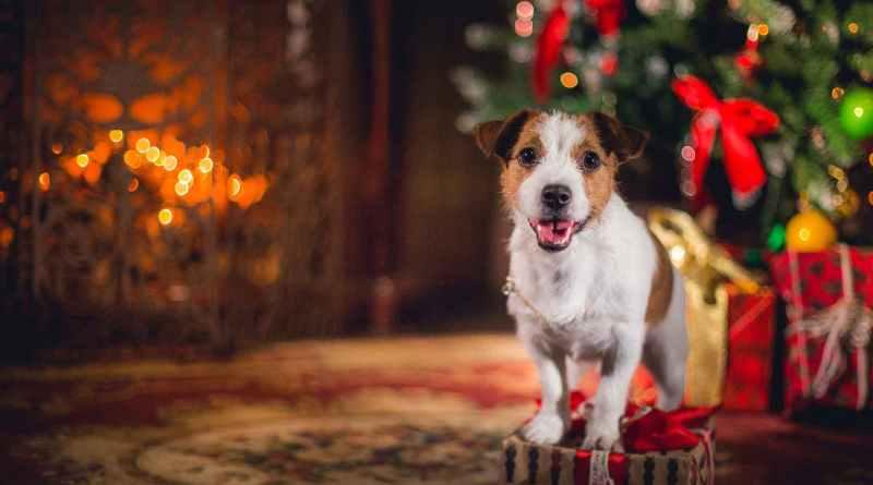 Come gestire i parenti e il tuo cane durante il pranzo di Natale!
