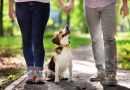 Un italiano su tre ha un animale in casa, 40 % sono cani.