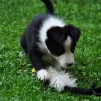 Obedience e preparazione del cucciolo