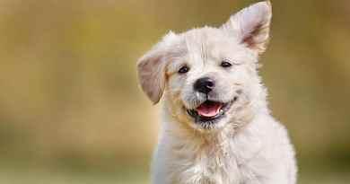Benessere animale: le cinque libertà applicate al mondo dei cani