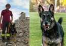 È morto Falco, cane vigile del fuoco operativo a Rigopiano. Aveva 9 anni