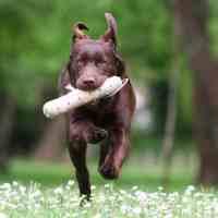 Giocare con il cane insegnando a riportarti un oggetto