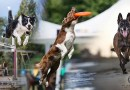 Il cane sportivo e l'importanza del defaticamento