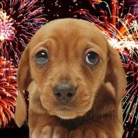 Botti di capodanno e cani: inutile ogni rimedio last minute