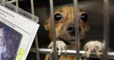 La vendita dei cani su internet, un enorme problema da risolvere